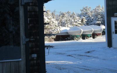 Winter Around the Yard